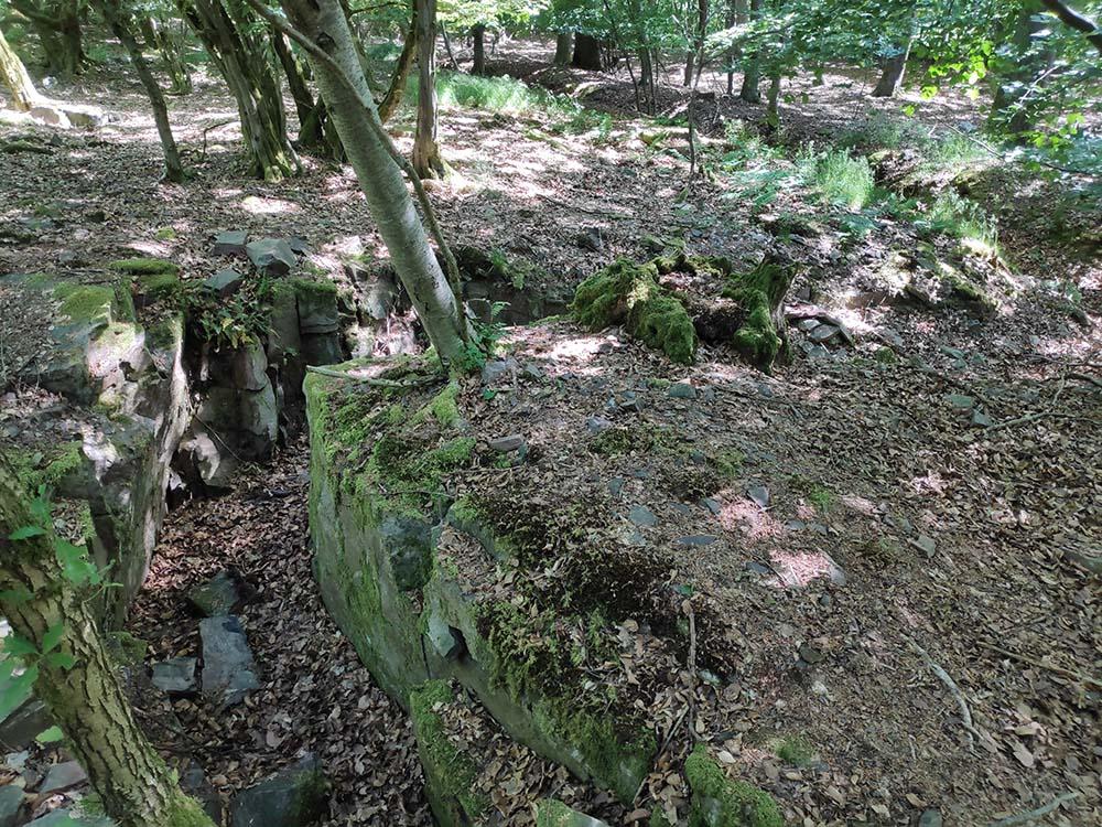 Schützengräben verlaufen druch den Wald